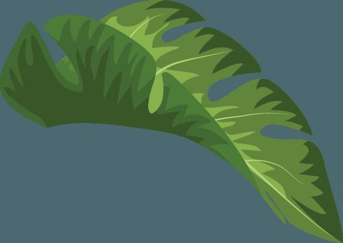 Coco Conga Leaf